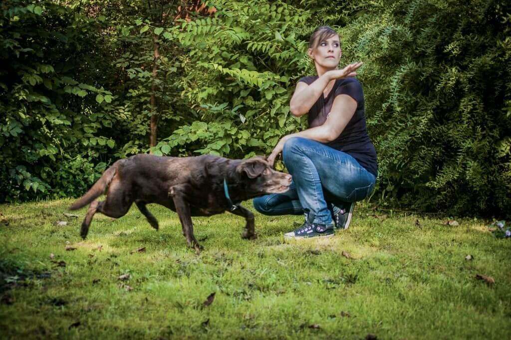 Hundetrainer Niederösterreich