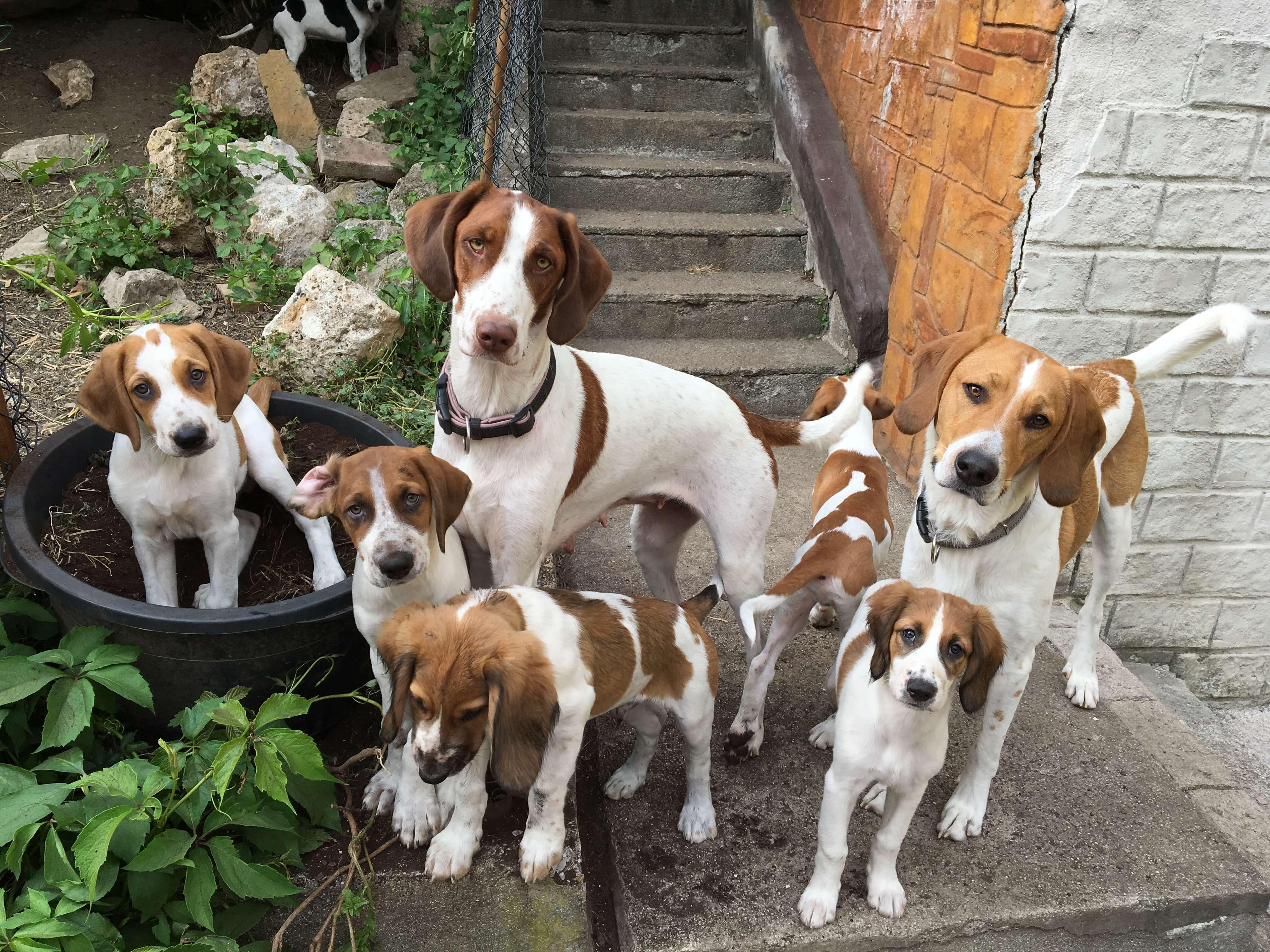Hundetrainer Welpen